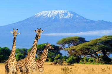 "Marea migrație a ""bestiilor""africane"